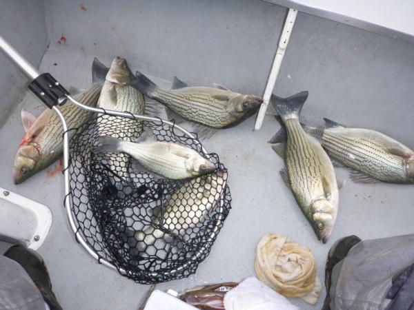 Winter Time Fishing...GO! Lake Texoma / Tawakoni Fishing Report